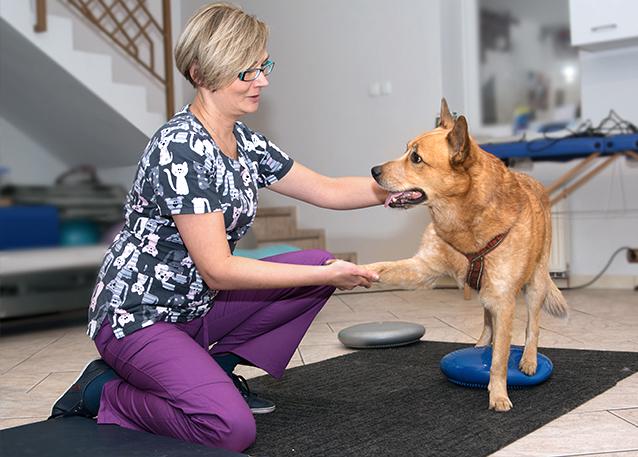 animal-active-rehabilitacja