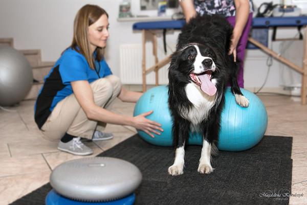 ćwiczenia-rehabilitacyjne-animial-active