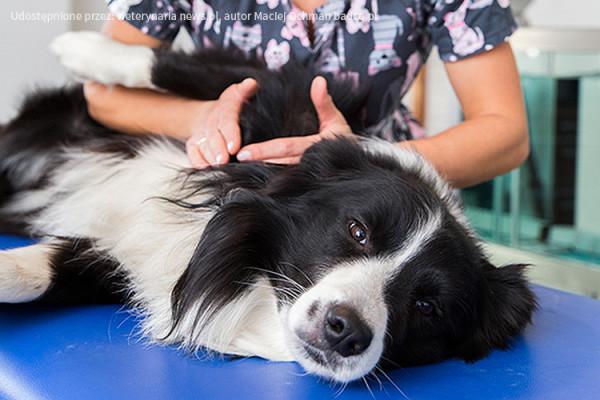 animal-active--terapia-manualna