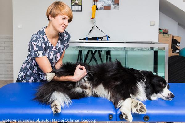 animal-active-terapia-manualna